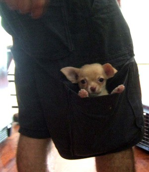 Pocket_pup